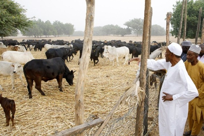 Nigeria's economy booming because people went back to farm - Buhari