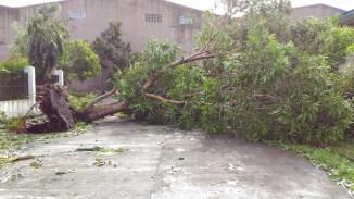 typhoon-nina3