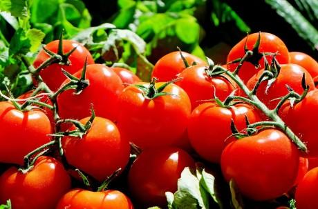 Tomatoes - Public Domain