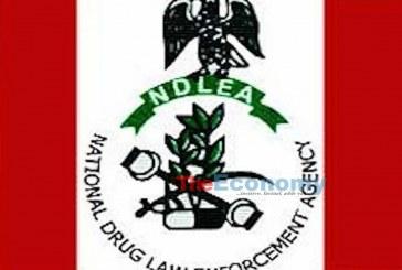 NDLEA intercepts over N15m worth of drugs in Lagos
