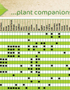 Vegetable companion planting chart pdf also charts for vegetables  fruit best of the web rh theedibleterrace