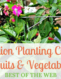 Companion planting charts for vegetables also  fruit best of the web rh theedibleterrace