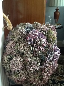 Hydrangea pomander