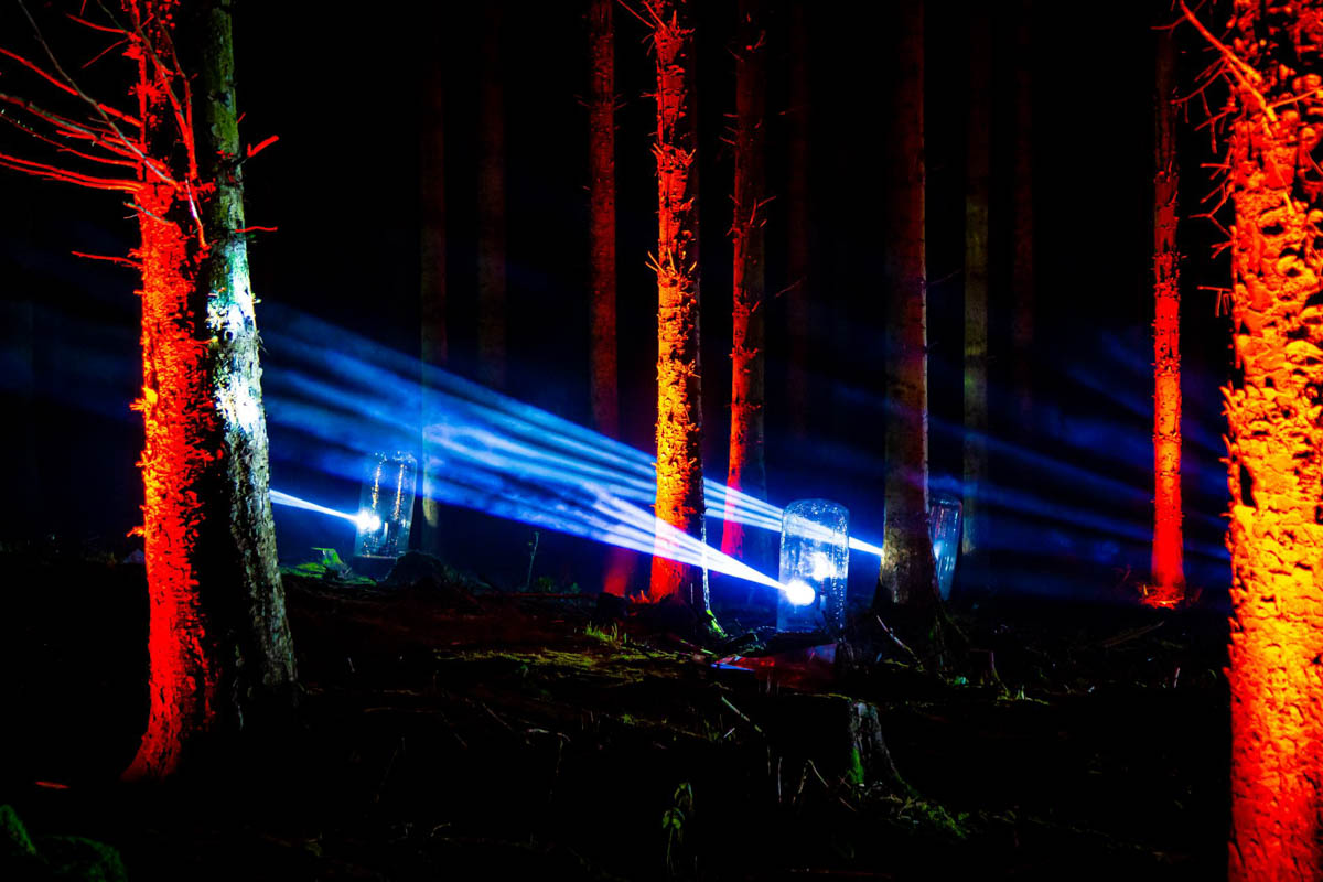 Trees lit with multi-colour lights