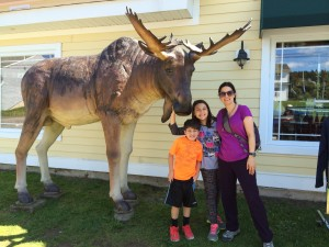 Moose in Canada with The Educational Tourist, Canada Travel Itinerary, www.theeducationaltourist.com
