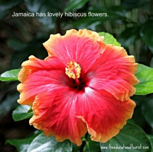 red and yellow hibiscus, Jamaica has lovely hibiscus flower, www.theeducationaltourist.com