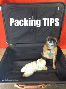 Lost Luggage tips: Brussels Griffon in suitcase