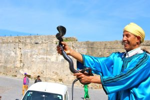 Cobra with snake charmer in Morocco.