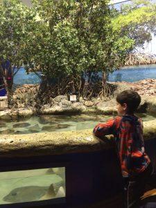 Oklahoma Aquarium Exhibit
