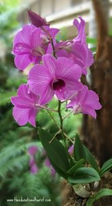 Purple orchid, Flowers of Hawaii, www.theeducationaltourist.com