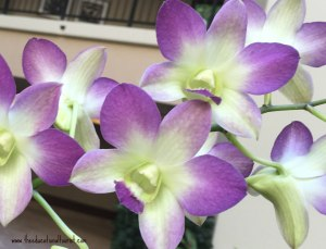 Purple and white orchids, Flowers of Hawaii, www.theeducationaltourist.com