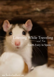 White rat with grey face markings, Learning While Traveling, www.theeducationaltourist.com