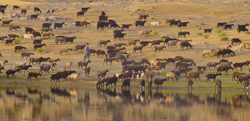 Opposing the Herd in Edchats - The Effortful Educator