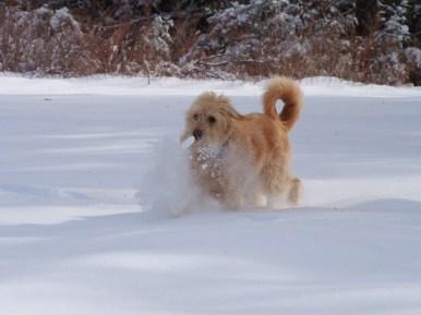 Snow Splash