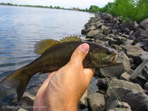 Smallmouth Bass - Thornton Gravel Lakes