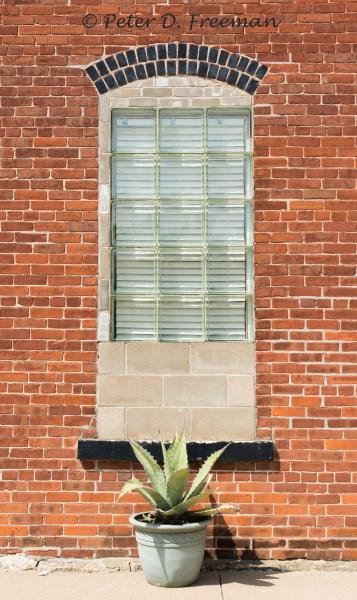 Iowa Succulent