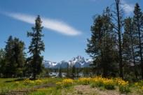 Teton Afternoon