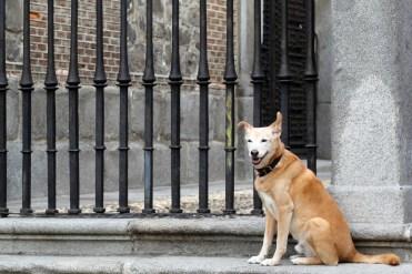 Madrid_Dog