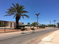 Emu on the street!
