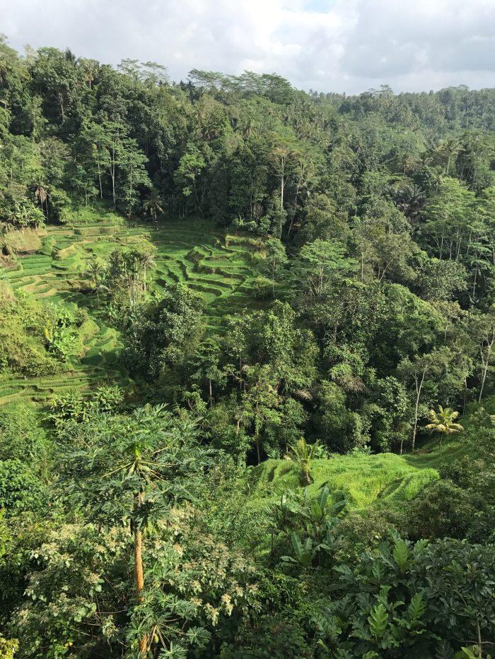 Bali Pulina Indonesia