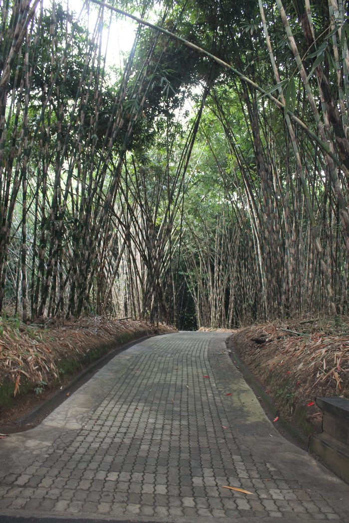 Bamboo Forest, Bali
