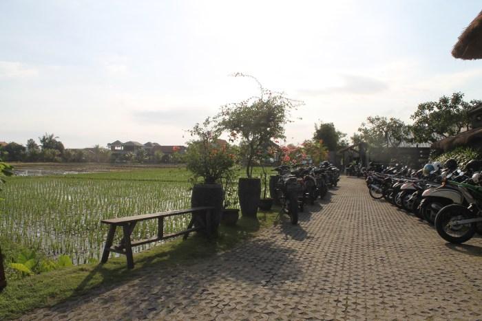 A guide to Canggu, Bali