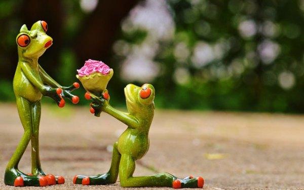 10 UNIQUE & Creative Marriage Proposals You Couldn't Say ...