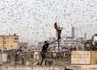 Plague of Locusts