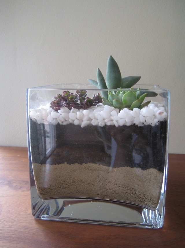 Square Glass Vases Bulk