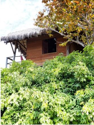 Love a good tree house