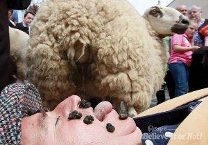 Sheep-Dung-1-300x210