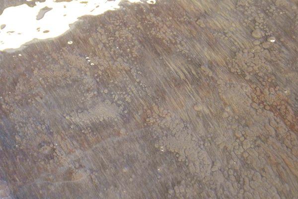 WoodFossil