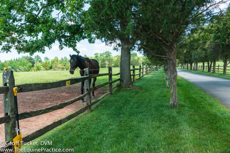 The Equine Practice Inc