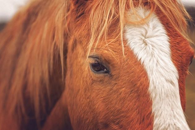 Horsefulness Liberty Training
