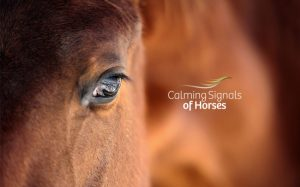 calming signals of horses