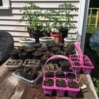 Home-based garden