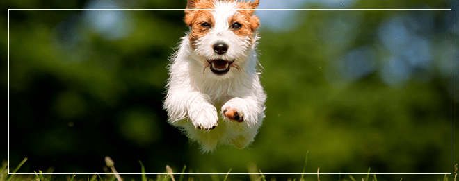 The Healthy Benefits of Pet Ownership Happy Dog Photo