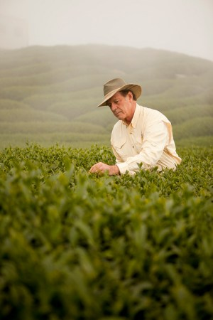 Gary Young inspecting the fields of tea in Taiwan
