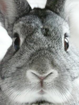 fav bunny