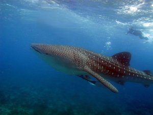 Diving in Pondicherry