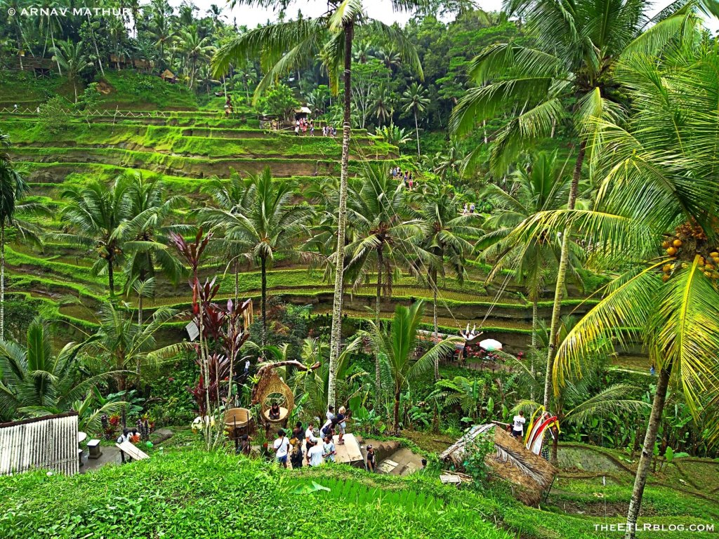 BaliSwing behind the scenes tegallalang rice terraces
