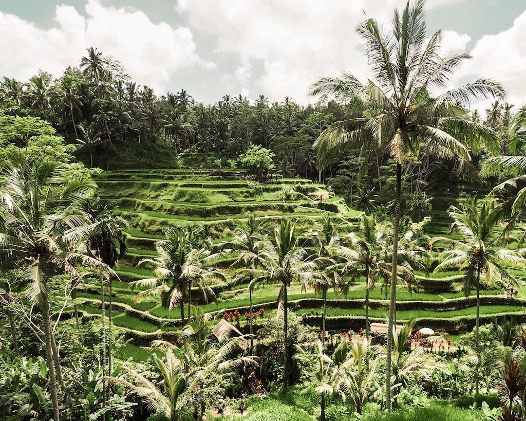 Best Things To Do in Bali - Tegallalang Rice Terrace ETLRblog