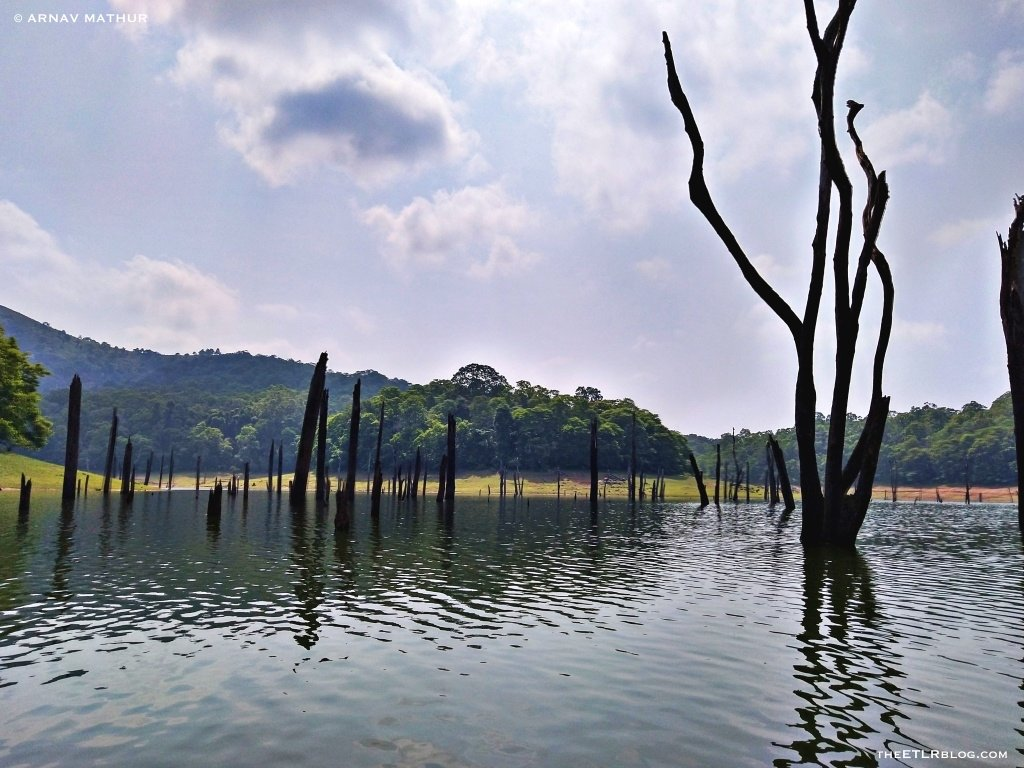 Bamboo rafting Periyar Tiger Reserve Kerala