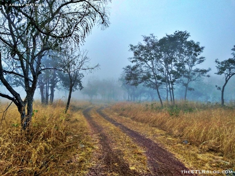 Morning Safari at Panna National Park - One of the Top National Parks in India that you need to visit | theETLRblog