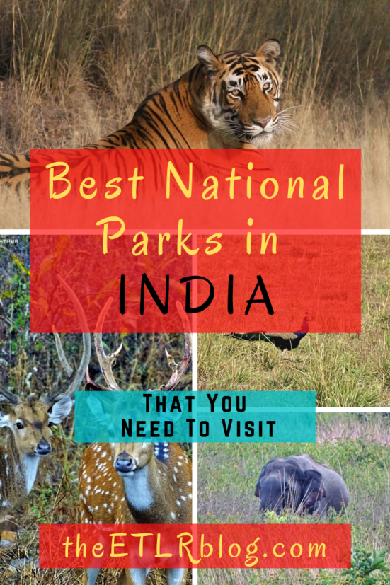 Top National Parks in India that you need to visit