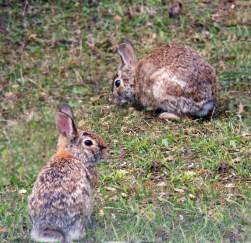 April, Hoppity and Floppity