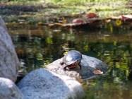 September, Turtle