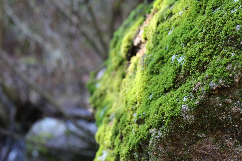 upper-maxwell-falls-moss-rock Evergreen Colorado