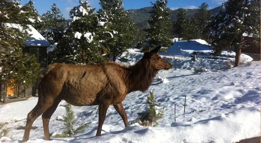 elk-snow-pic-evergreen-co