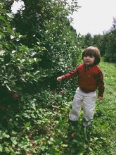 Fall, apple picking